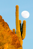 Full Moon and Saguaro Cactus