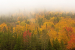 Autumn Foliage and Fog on Greeley Ponds Trail, Kancamagus Highway, White Mountains, New Hampshire