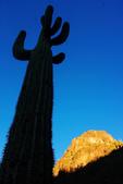 Saguaro Cactus and Picacho Peak, Picacho Peak State Park, Arizona