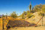 Gould Mine Shaft, Sonoran Desert, Saguaro National Park, Arizona