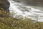 Willow and Gullfoss Waterfall, Hvítá river, Golden Circle, Iceland