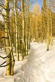 Hiking Trail Through Aspen Trees in Winter, Spooner Lake, Lake Tahoe-Nevada State Park, Nevada