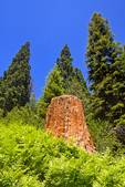 Sequoia Stumps and Regrowth, Big Stump Trail, Kings Canyon National Park, California