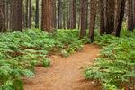 Zumwalt Meadow Trail, Kings River, Kings Canyon National Park, California