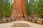 Sign and General Sherman Tree, Sequoiadendron giganteum, Giant Forest, Sequoia National Park, California