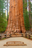 Sign and General Sherman Tree, Giant Sequoia, Sequoiadendron giganteum, Giant Forest, Sequoia National Park, California