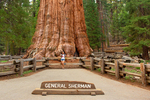 Hiker and General Sherman Tree, Sequoiadendron giganteum, Giant Forest, Sequoia National Park, California