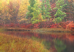 Fall Color Triangle Lake Bog