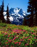 North Face of Mt. Shuksan