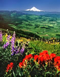 Hood River Valley and Mt. Hood