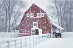 Wintering barn and horse