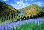 Grande Ronde River and camas blooms