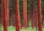 Big Pine Flat