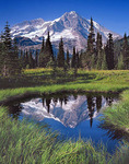 Mt. Rainier from Indian Henry's Hunting Ground