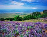 Dalles Mountain Ranch State Park, Washington