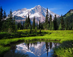 Indian Henry's Hunting Ground and Mt. Rainier