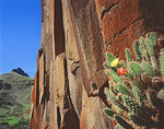 Prickly Pear Cactus on Columnar Basalt