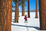 Ski Trail Through Ponderosa Pines