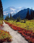 Wonderland Trail in Mt. Rainier National Park
