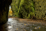 Photographing Oneonta Gorge