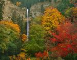 Autunm colors and Multnomah Falls