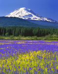 Mt. Adams from Conboy Lakes National Wildlife Refuge, Washington