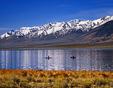 Fishing Mann Lake below Steens Mountain