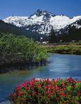 Eagle Cap Mountain and heather