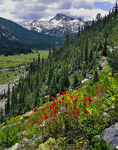 Eagle Cap Mountain and wildflowers