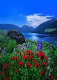 Wildflowers on the moraines of Wallowa Lake