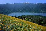 Flowering balsam root on Dog Mountain above the Columbia River