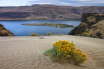 Dunes and rabbitbrush above the Columbia River near The Dalles