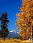 Mt. Washington and aspens