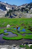 Backpacker in meadow