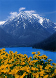 Mt. Bonneville and balsam root blooms at Wallowa Lake