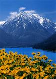 Mt. Bonneville and balsam root blooms at Wallowa Lake