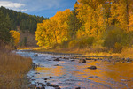 Grande Ronde River at Hilgard Junction State Park