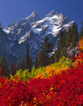 Grand Teton and Mt. Owen with mountain ash in October