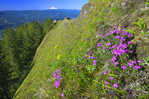 Steep meadow in the Columbia River Gorge