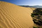 Dune and sagebrush