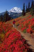 Trail through huckleberry fields and Mt. Rainier
