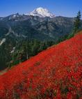Mt. Rainier from huckleberry fields of Naches Peak