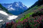 Mt. Shuksan and heather