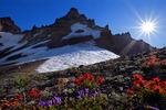 Broken Top Mountain and wildflowers