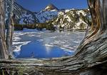 Ice Lake and whitebark pines