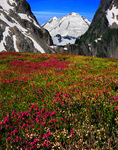 Mt. Baker and heather fields