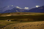 Fields below the Wallowa Mountains