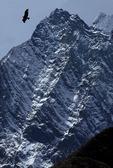 Condor in Cordillera Huayhuash