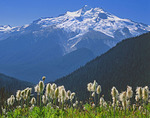 Glacier Peak and western pasque flower