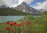 Mt Chephren and Waterfowl Lake